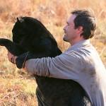 Kevin Richardson con leopardos negros