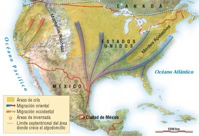migracion mariposa monarca