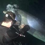 Vídeo de un delfín que pide ayuda a unos buceadores