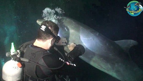 Video del delfín que pide ayuda a unos buceadores