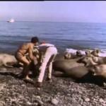 El Mundo Submarino De Jacques Cousteau – El retorno del elefante marino