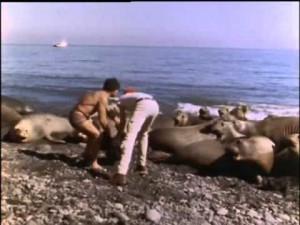 El Mundo Submarino De Jacques Cousteau -elefantes marinos