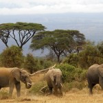Manada de elefantes en Kenia
