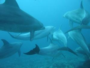 comunicacion delfines