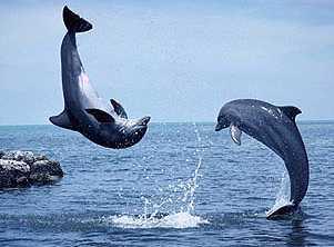 El cerebro de los delfines