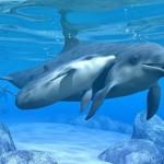 Entender a los delfines. Documental de Redes