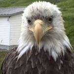 Un águila sin nada que decir