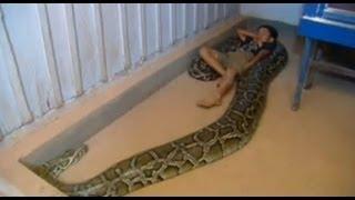 Amistad entre un niño y una anaconda de 5 metros