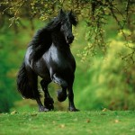 El vídeo de caballos más hermoso
