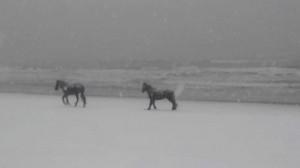 caballos salvajes playa nevada