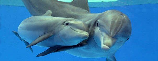 delfines con cria