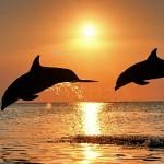 Comunicación de los delfines