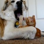 Gatito intenta robar la lengua a un perro