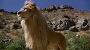 lufuno leon blanco