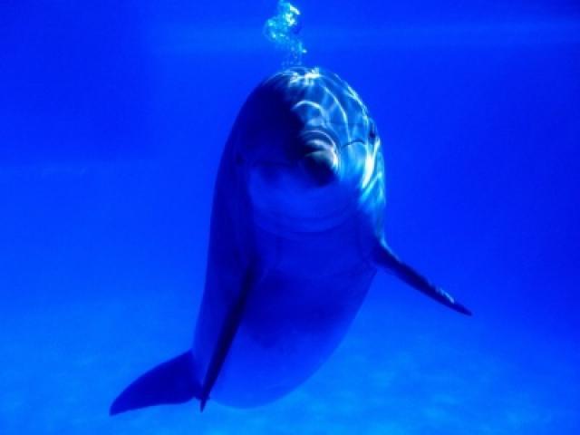 Música y vídeo de delfines bajo el agua