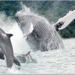 Música de relajación – Delfines y ballenas