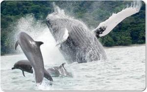 musica delfines ballenas