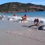 Grupo de personas salvan la vida a 30 delfines en la playa