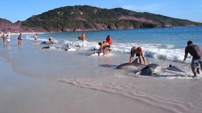 personas salvan delfines playa