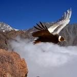 Documental: La Tierra Desde el Cielo – Sudamérica