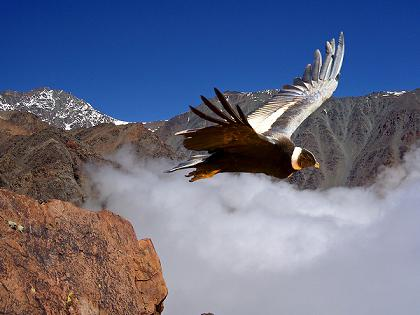 condor de los andes documentales animales la tierra desde el cielo