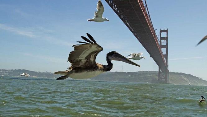 documentales animales la tierra desde el cielo asi se hizo pelicano
