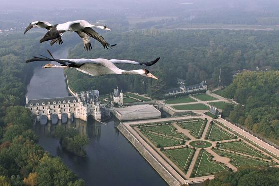 documentales animales la tierra desde el cielo europa