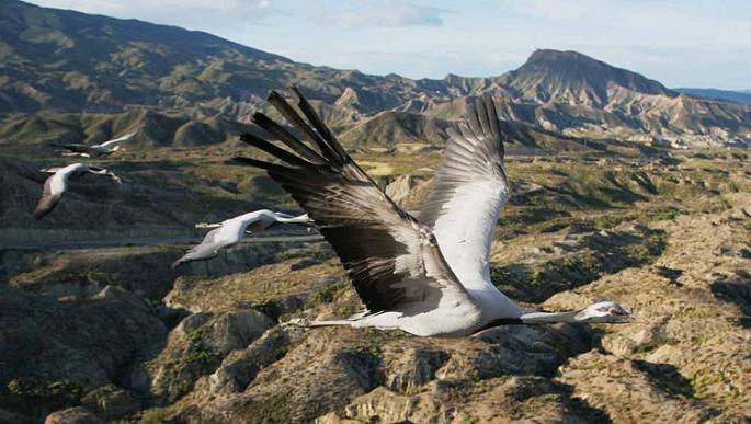 documentales animales la tierra desde el cielo