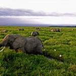 Documental: La Tierra Desde el Cielo – África