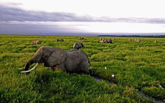 elefantes documentales animales la tierra desde el cielo africa