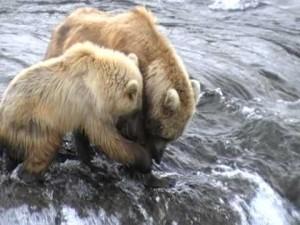 osos cachorro