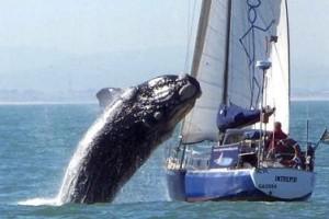 ataque ballena yate