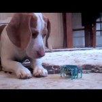 Perro cachorro vs robot teledirigido