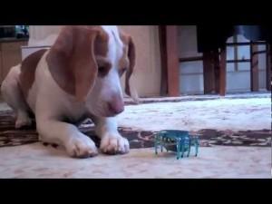 cachorro perro robot