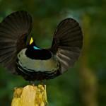 Vídeo introducción al proyecto Aves del Paraíso