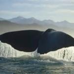 Marineros liberan a una ballena atrapada en una red y esta enloquece de felicidad