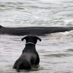 Una orca y un perro jugando