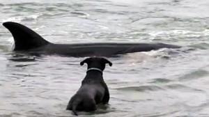 orca jugando perro