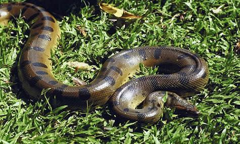 mejores videos anacondas