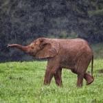 La fiesta de los elefantes en el barro