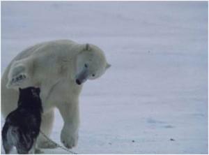 oso polar perro jugando