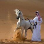 Vídeo homenaje a los caballos árabes