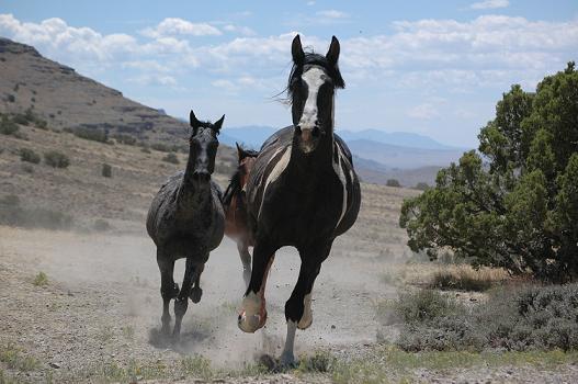 El rítmo de los caballos (HD)