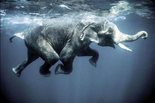 Elefantes jugando en el agua en Camboya