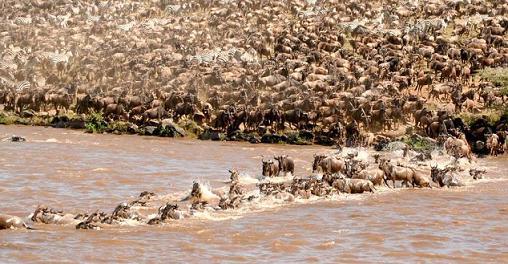 grandes migraciones animales