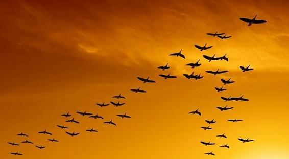 Grandes migraciones aves
