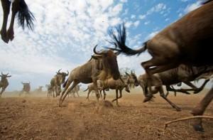 grandes migraciones ritmo vida