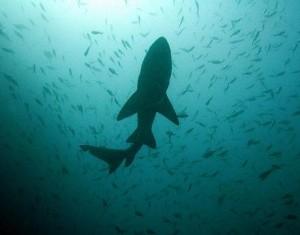 tiburones sociales