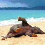 Un elefante joven jugando en la playa