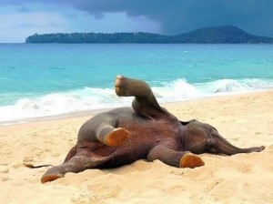 joven elefante jugando playa